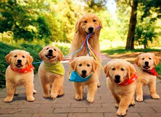 hond laat pupjes uit